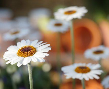 Wszystko dla miłośników ogrodów
